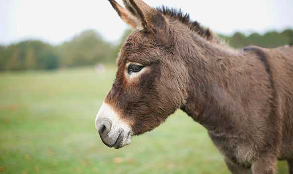 Come and see Donkeys at this years Christmas Fair!