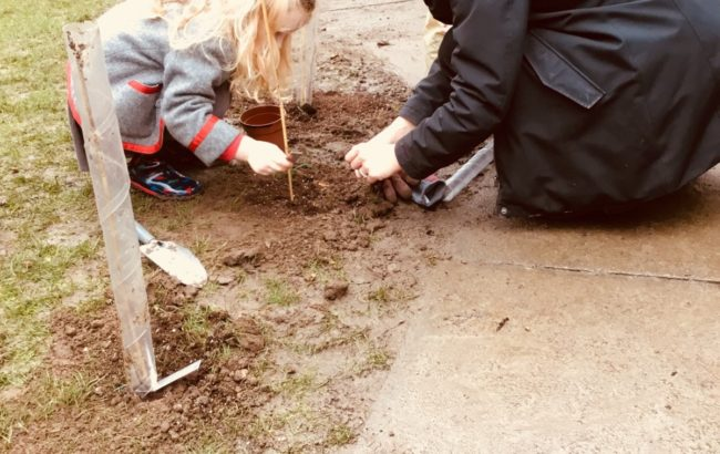 The Woodland Trust tree planting project – we are planting our own trees