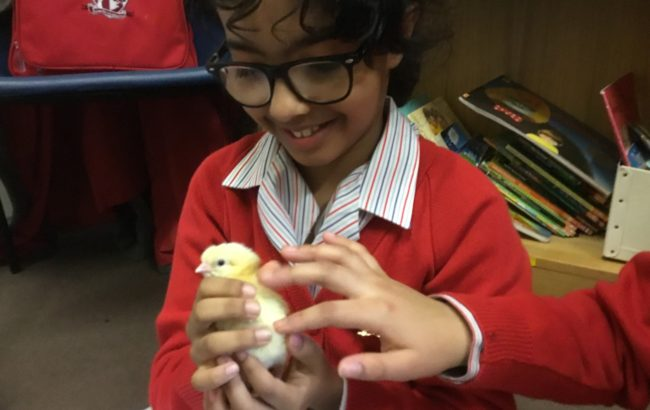 Our last chicks have hatched! 20/20 – the best year ever.